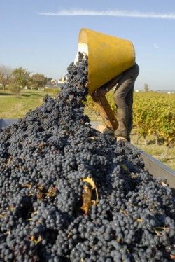 Vendanges ©Fotolia